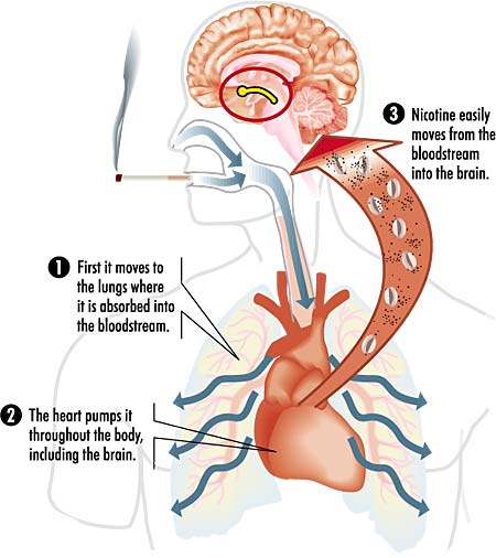 Cervello e dipendenza da nicotina